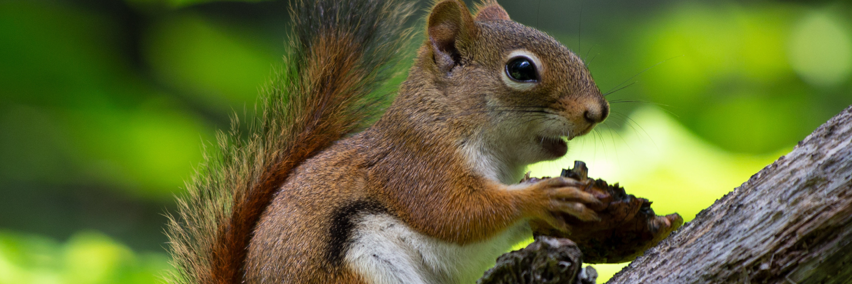 Barron, the squirrel