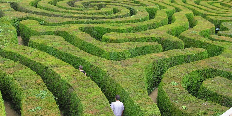 people walking in a hedge maze